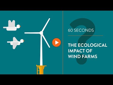 Ecological impact of wind turbines - IN 60 SECONDS