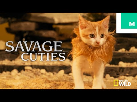 Kittens & Puppies Recreate 'Savage Kingdom' Season 1 (with Game of Thrones' Charles Dance)