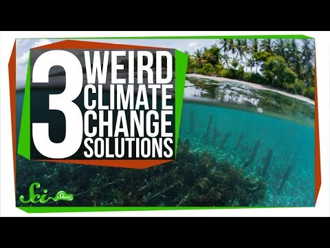 3 (Actually Safe) Ways to Fight Climate Change
