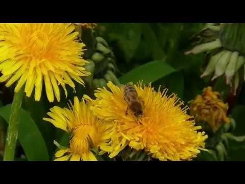 New varroa mite treatment VARROA BUSTER