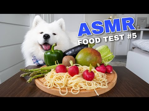 Xxx Mp4 ASMR Dog Reviewing Different Types Of Food 5 I MAYASMR 3gp Sex