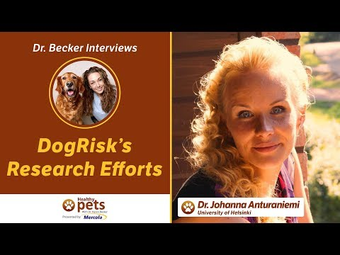 Dr. Becker Interviews Dr. Johanna Anturaniemi About DogRisk's Research Efforts