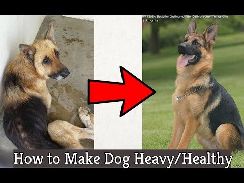 How to make Your Dog Heavy