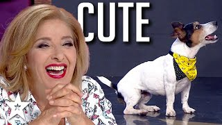 ADORABLE Dog Act Gets Judges Laughing on Got Talent Bulagia | Got Talent Global
