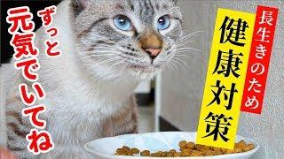 Download 猫に長生きしてほしいのでご飯を工夫してみました【キャットフードのローテーション】 Video
