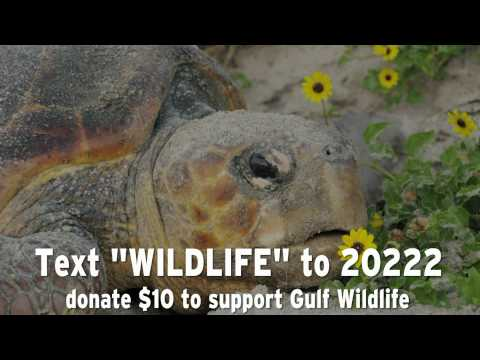 How You Can Help Save Wildlife in the Gulf