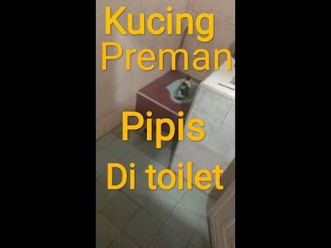 Xxx Mp4 Kucing Preman Kalau Pipis Di Toilet 3gp Sex