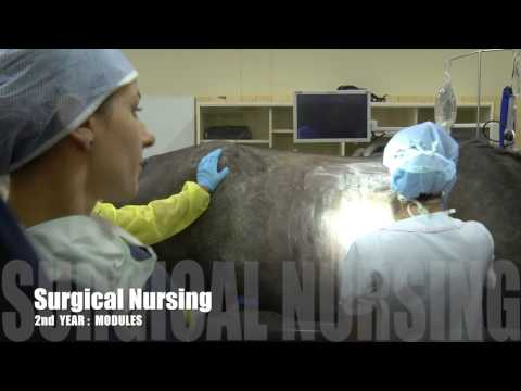 Veterinary Nursing, Faculty of Veterinary Science, University of Pretoria