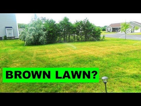 Diagnosing a brown lawn