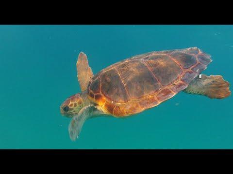 Saving Israel's Sea Turtles