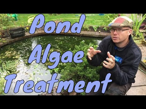 Algae Products & Treatments UK   Fish Pond Algae Treatments
