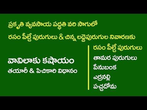 ZBNF Paddy PoP II  7- Sucking Pest Control With Vaavilaaku Kashayam II RySS & DoAG & DG II A.P.