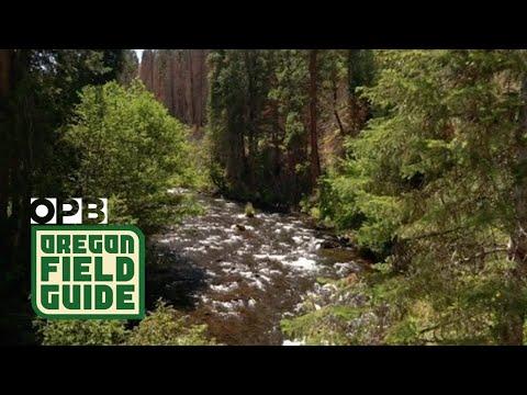 Oregon's Wenaha River