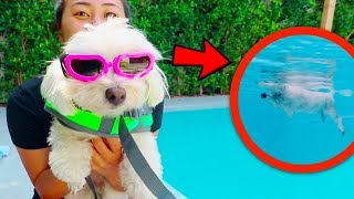 PUPPY LEARNS TO SWIM!
