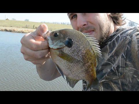 Farm Pond Bluegill Fishin