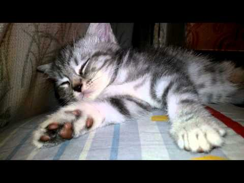 Do Baby Kittens Sleep a Lot? - Котенок засыпает