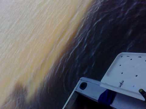 Bull Shark Brisbane River 25/01/10