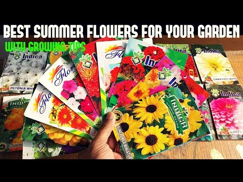 Top Summer Flowers For Your Garden-With All Care Tips