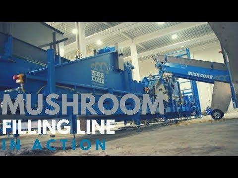 Mushroom Machinery - Inspiring Tray Filling Equipment