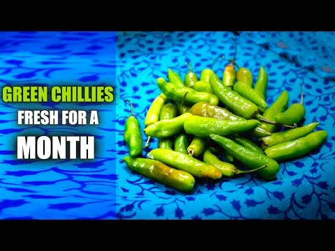 How To Store Green Chillies in Fridge for Long Time | Kitchen Safari - Hack 1