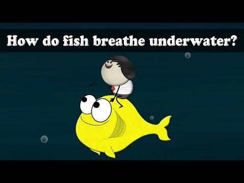 How do fish breathe underwater? | It's AumSum Time