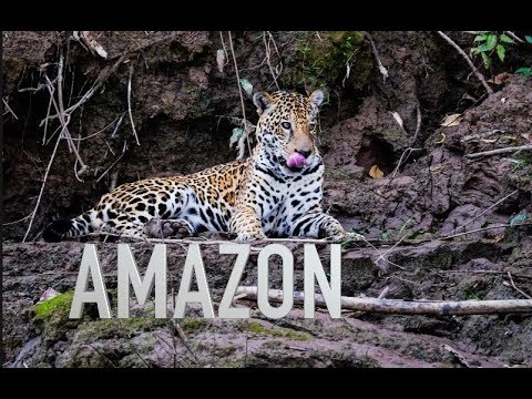The Amazon Jungle Peru