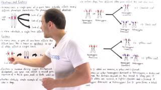 Pleiotropy and Epistasis