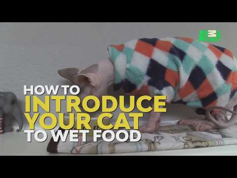 How To Transition from Dry To Wet Food