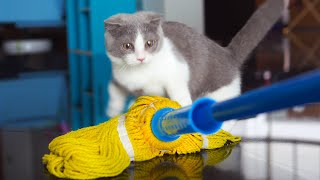 Kitten Reacts To A Mop For The First Time | *Coco Got Scared*