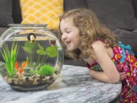 NoClean Aquariums Self-Cleaning Fishbowl Kickstarter Video - GravityFlow2