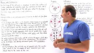 Mitosis and Cytokinesis