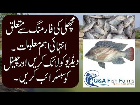 Introduction to Fish Farming. How to make Fish Farm Hindi & Urdu with English Subtitles Video 1