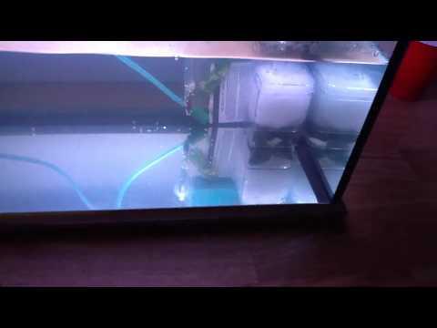 Cory spawnage