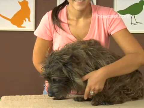 How To Trim Your Dog's Nails [www.scruffmacduff.co.uk]