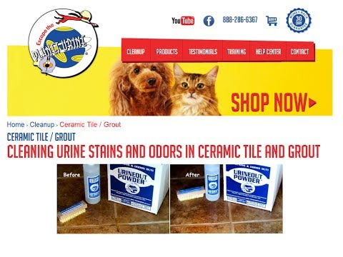 Cleaning Dog and Cat Urine from Tile & Grout