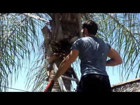How Clean  a Tall Palm Tree