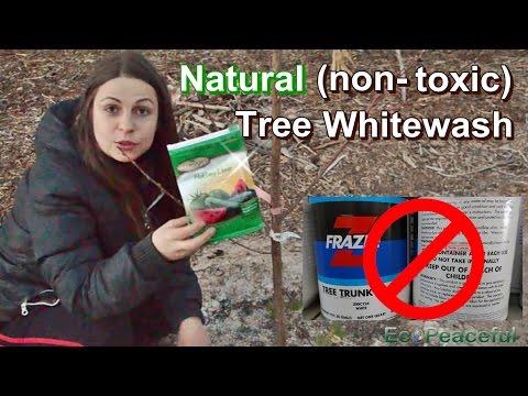 Non-toxic Whitewash - Natural Tree Trunk Paint - DIY Super Easy & Vegan
