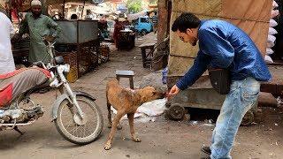 A dog rescue in Karachi