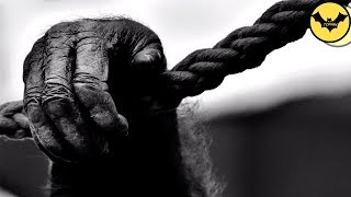 5 Creepy Animals Behaviors That Science  Can