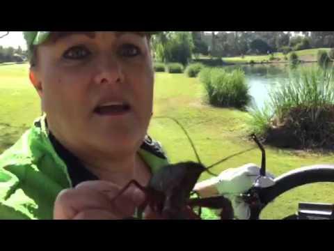 Saving the crawfish!