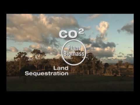 Holistic Management: Plants are a bridge that connect atmospheric CO2 with soil carbon.