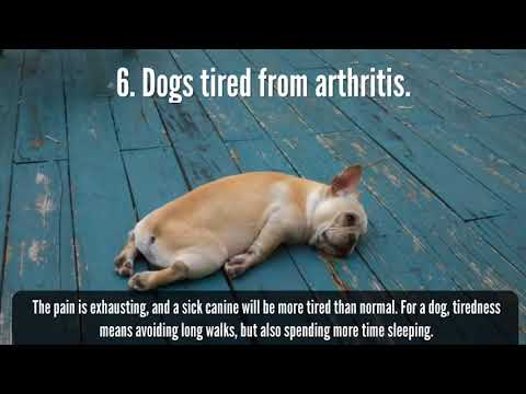 Arthritis in the dog, what is this disease?