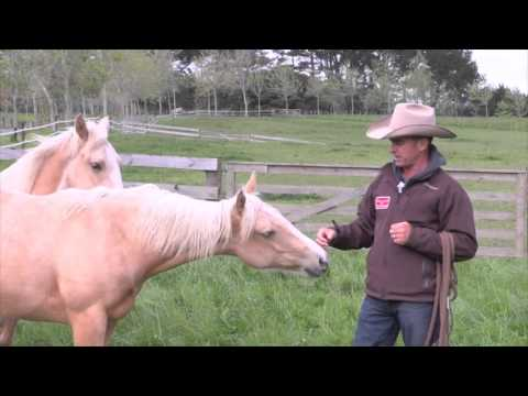Building a rapport with your horse
