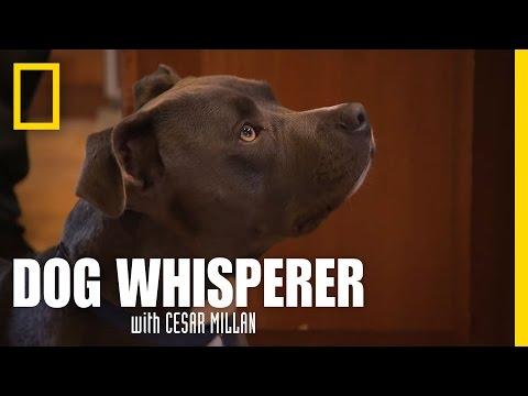 Pit Puppy Lessons | Dog Whisperer