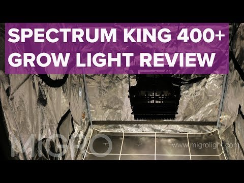 Spectrum King 400+ test and review