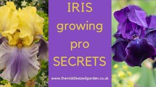 Iris growing - how to choose, plant and grow irises
