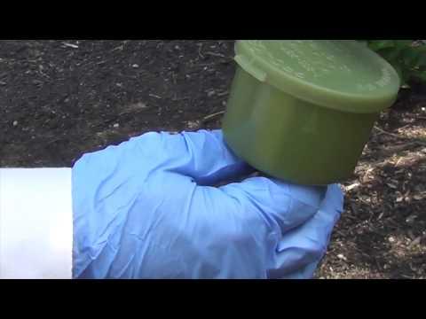 DominAnt Liquid Ant Bait