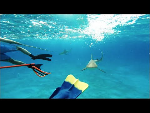 Attacked by Reef Sharks in Bahamas