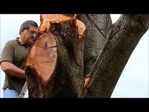 Scary Amateur Tree Removal Part 2