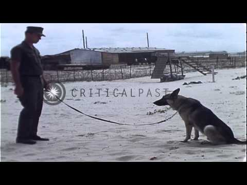 United States Navy Sentry John B. Robbins demonstrates various orders with his do...HD Stock Footage